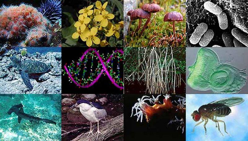 Mikroskop biologija digitalni mikroskop usb led biologija
